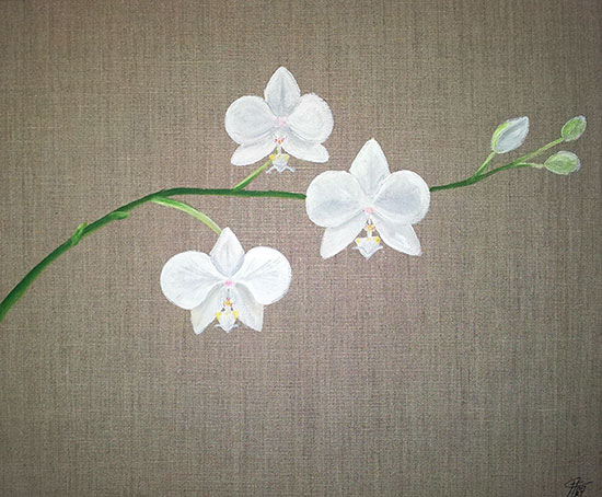 photo_tableau_Orchid�e Blanche